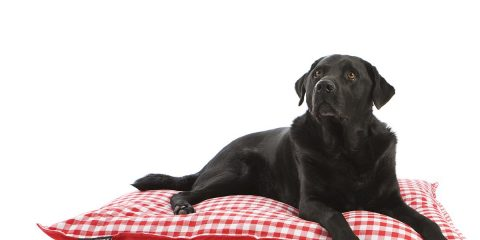 De mooiste hondenbedden