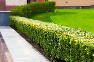4 gouden tips voor een onderhoudsvriendelijke tuin