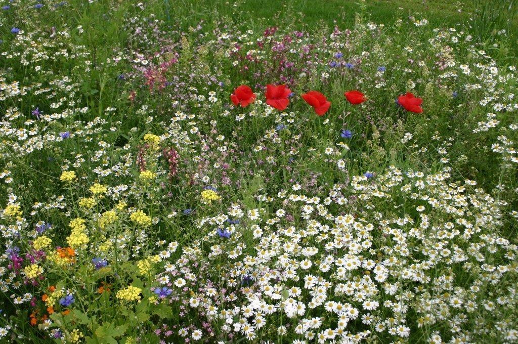 weiland met wilde bloemen