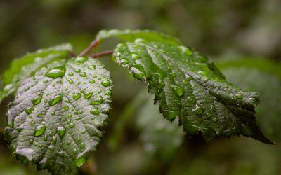 3 redenen om voor een beregeningssysteem in de tuin te kiezen
